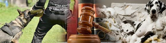 Profesiones de futuro: PERITO JUDICIAL EN ADIESTRAMIENTO Y CONDUCTA CANINA - Estudios de  Empresa